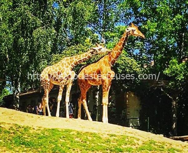 Le top des testeuses Zoo de Beauvalpar Ma Page à Moi... Article bloggeuse Invitée Leurs Régions