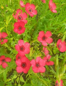 Florale du Mois