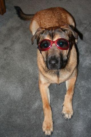Riley Goggles