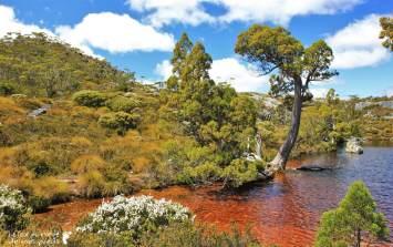Cradle-park-tasmanie (9)
