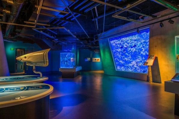 Aquarium Deep @ Frost Science_Photo by Ra-Haus