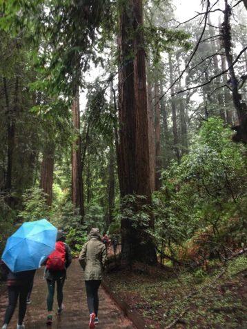Walking through Muir Woods in California