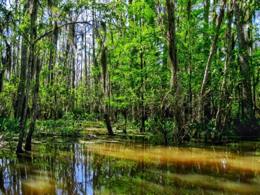 Honey Island Swamp New Orleans Louisiana