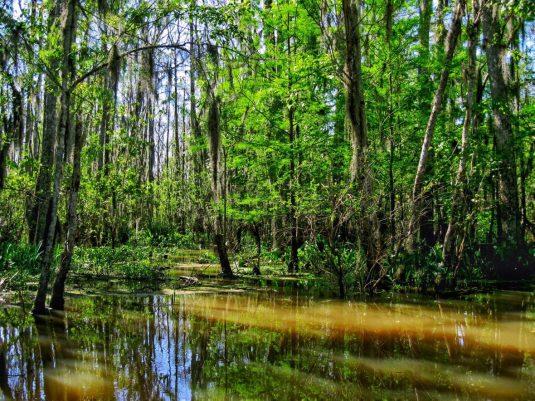Honey Island Swamp New Orleans Louisiana