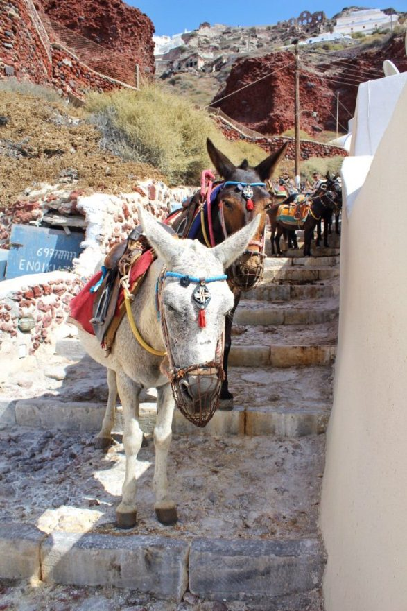 Donkeys waiting at the bottom of the path going down to Amoudi Bay