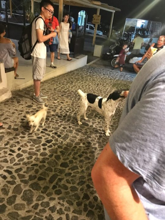 Dogs outside of Pito Gyros restaurant in Oia Santorini