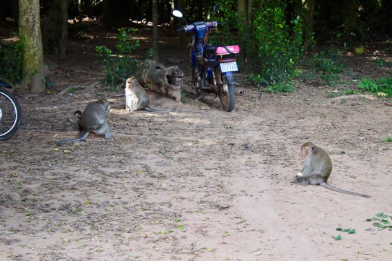 Angkor Wat Monkeys
