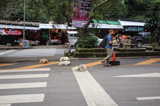Eric taking a video surrounded by dogs Chiang Mai Thailand