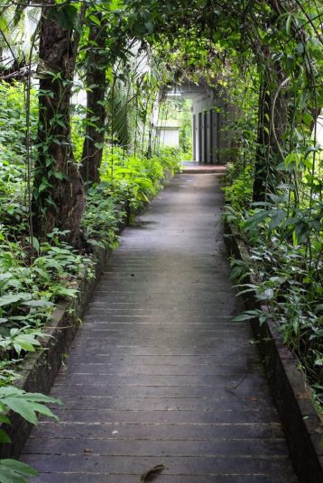 Pathway to Wat Pha Lat from Chiang Mai