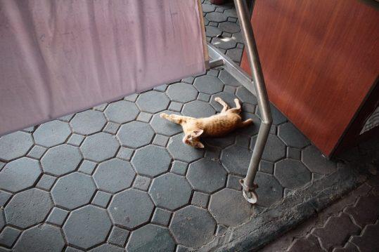 Kitten at Wat Sri Supan the silver temple in Chiang Mai Thailand