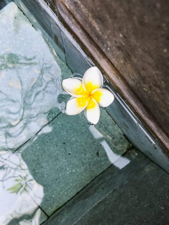 Flower in pool at The Amala in Seminyak Bali