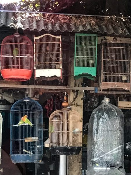 Bird cages along the road in Bali