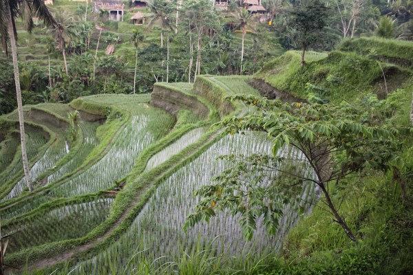 View from Tegalalang Rice Terraces in Ubud Bali
