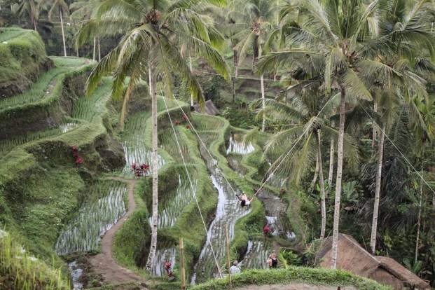 Swing at Tegalalang Rice Terraces in Ubud Bali