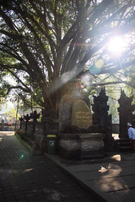 A beautiful tree at Tirta Empul Holy Springs Temple Ubud Bali
