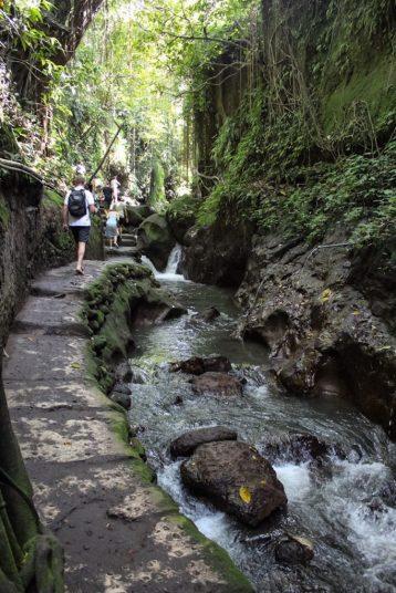 Pathway within monkey forest ubud, Bali