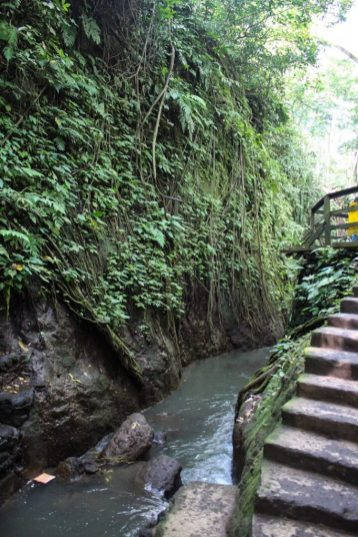 gorge within monkey forest ubud bali