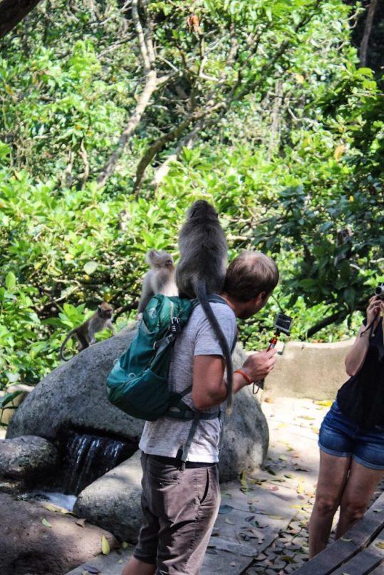 Monkey on a guy's back in monkey forest ubud bali