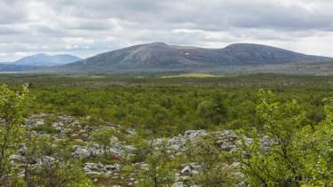 Utsikt tillbaka mot Skedbrofjället