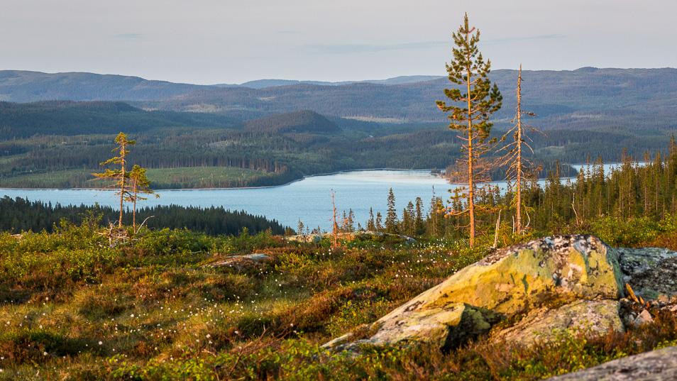 Kvällsutsikt över Gråsjön