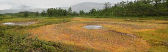 myrområden runt Tärnasjön