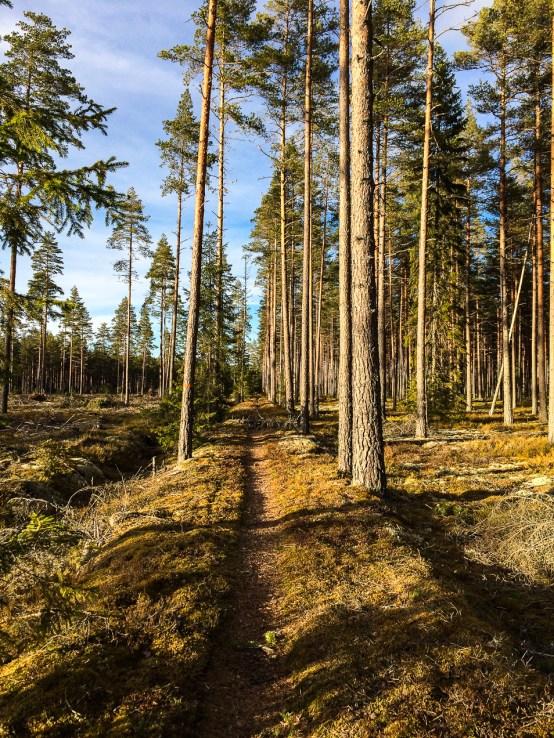 Avverkad skog.