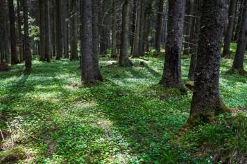 Vacker skog