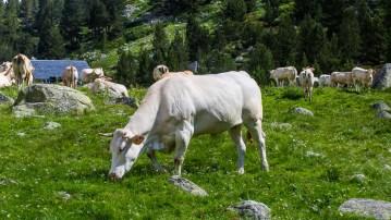 Kor på stigen upp till Vignemal