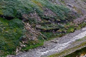 Frodig växtlighet nere i kanjonen