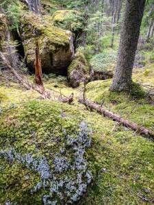 Block i Tivedsskogen