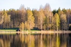Vindskydd Dammsjön