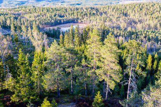 Utsikt över skogen
