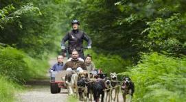 Itinerance Mushing - Attelages canins - cani-kart - cani-rando - sur réservation au 06.70.19.22.53