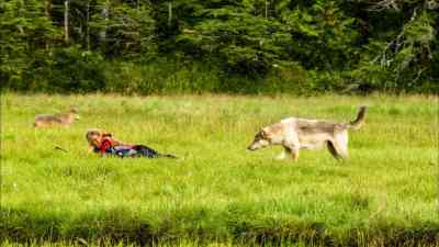 11, Gudrun Pflueger surrounded by coast wolves in Canada BC