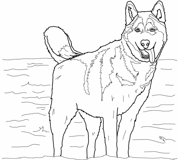 Husky Coloring Pages Free Printable Coloring Pages For Kids