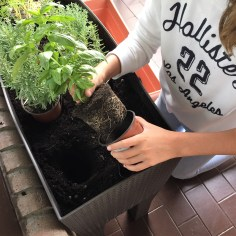 08-huerto-de-otono-sacamos-las-plantas-del-tiesto