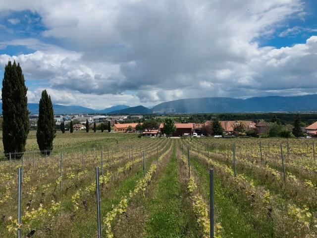 Bike ride Geneva vineyards. Biking in the countryside of Geneva