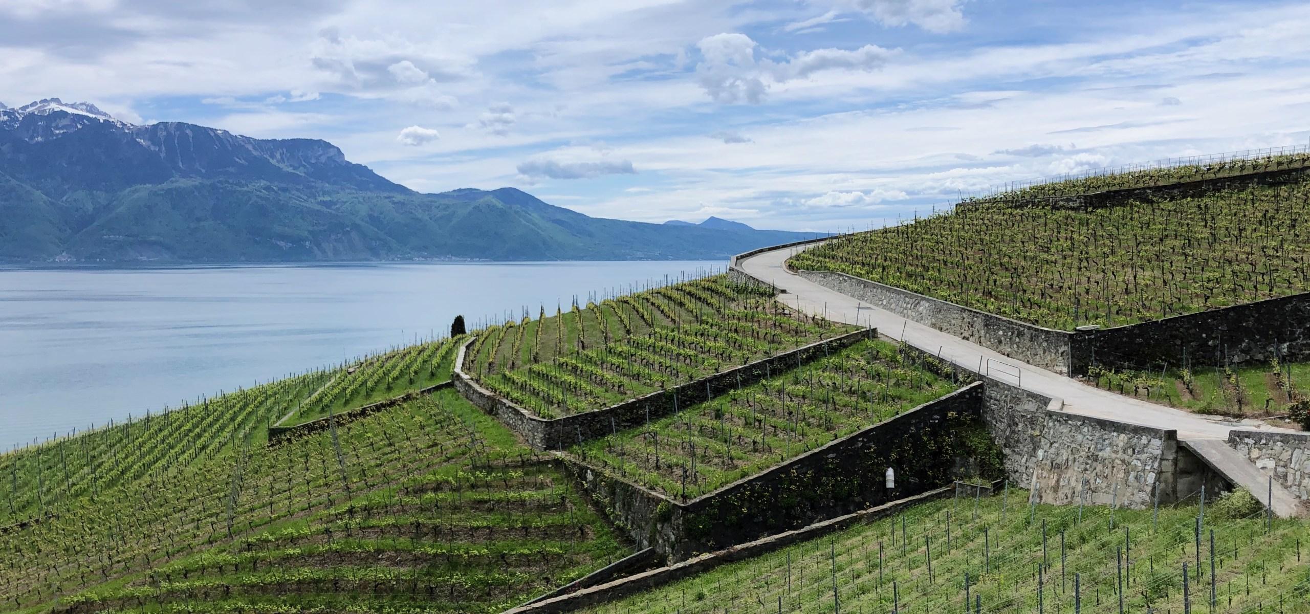 Lavaux vineyards walk