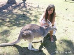 Lone Pine - Among kangaroos 2
