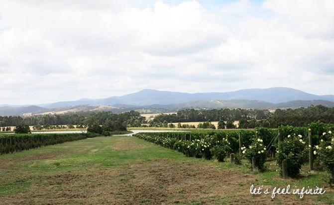 Chandon - Les vignes 4