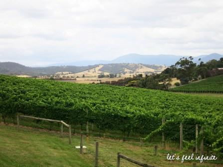 Yarra Valley Wineries Tour - Midi