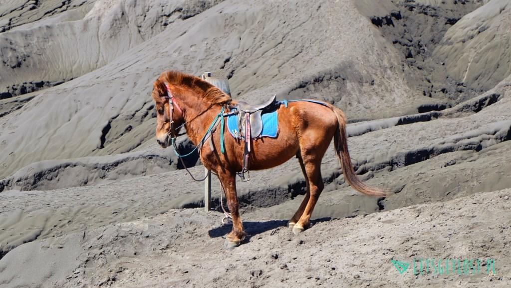 Koń wulkan Bromo