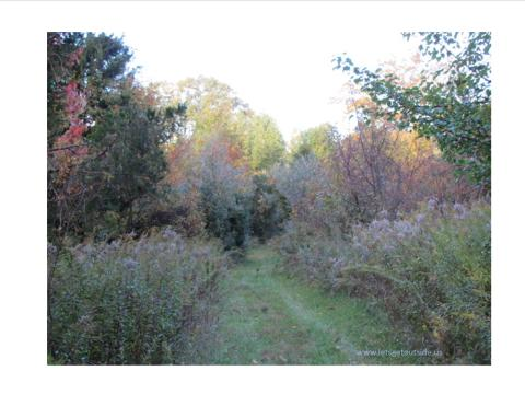 a grassy path through brush and trees of various colors