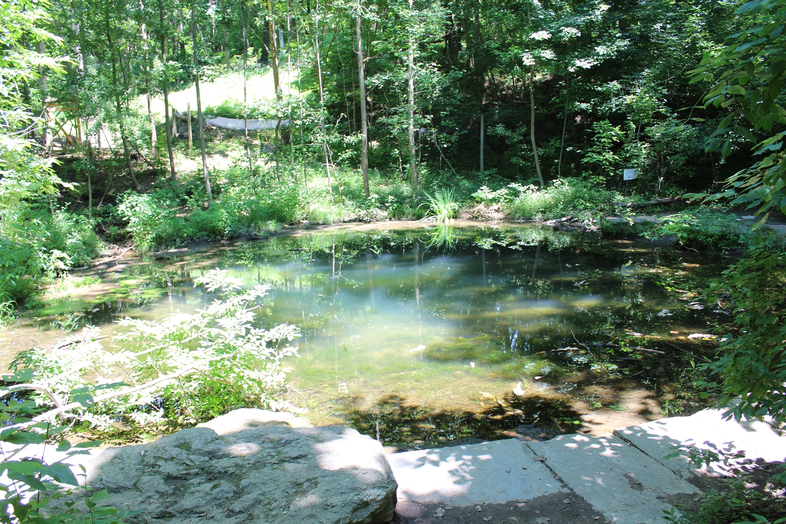 a pond surrounded by stone