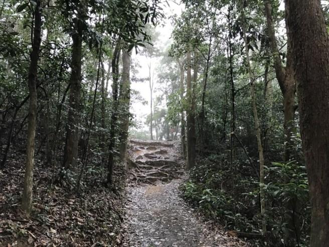 大埔滘自然教育徑 – 啡路