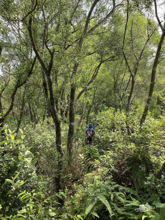 Hiking 4.10.2020 Fung Hang (15)
