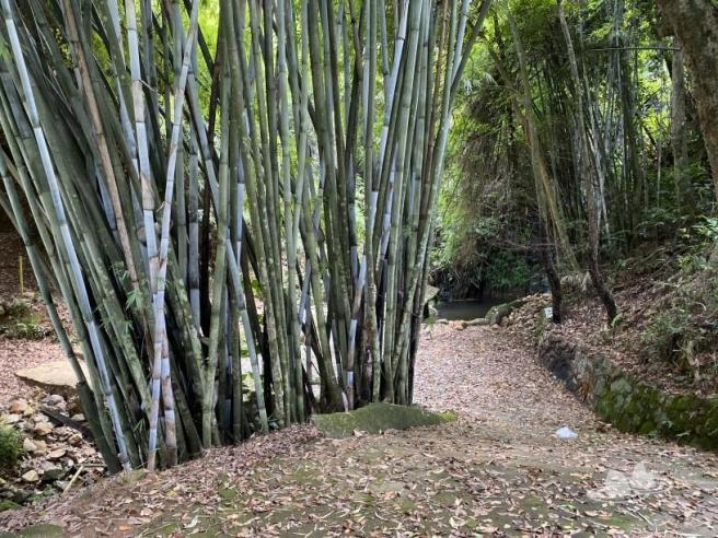 Hiking 4.10.2020 Fung Hang (41)
