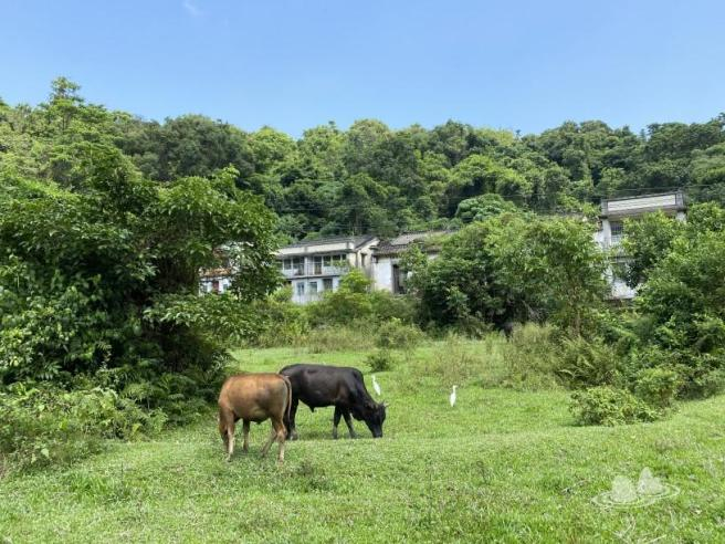 Hiking 4.10.2020 Fung Hang (55)