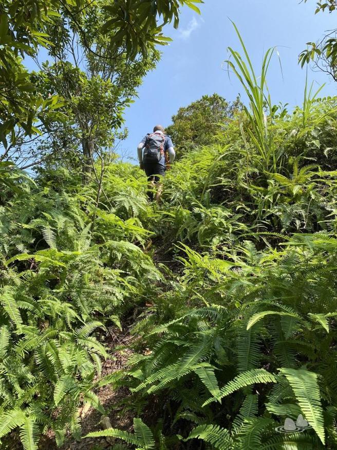 Hiking 4.10.2020 Fung Hang (7)