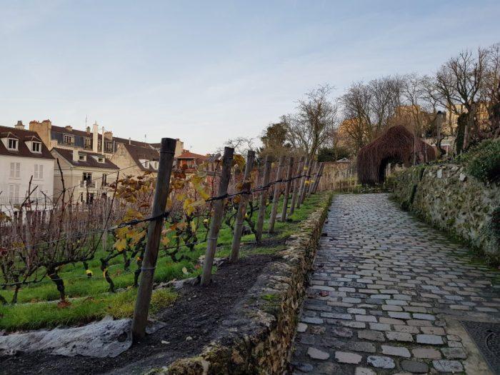 Vignes du Clos Montmartre